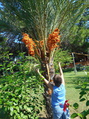 boy with hands up near the date palm.