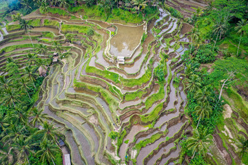 Acrylic Prints Rice fields Aerial view of terraced rice fields, Bali, Indonesia