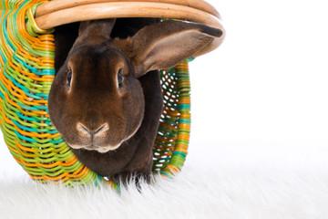 Brown rabbit in a basket