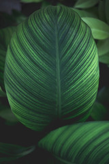 Green leaves background. Nature, plant and freshness concept