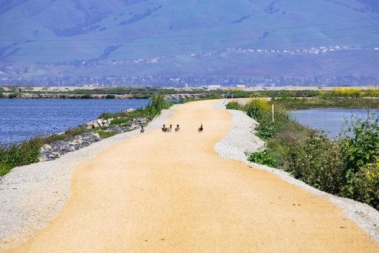 The bay trail, Sunnyvale, south San Francisco bay area, California