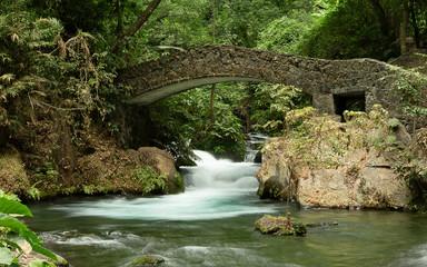 puente en el bosque Wall mural