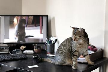 Kleine Katze vor Monitor