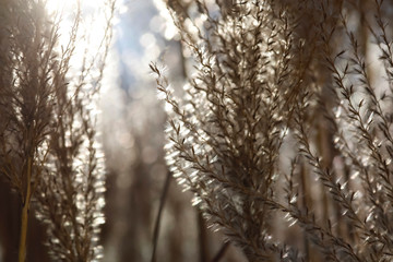Detail of grasses in winter