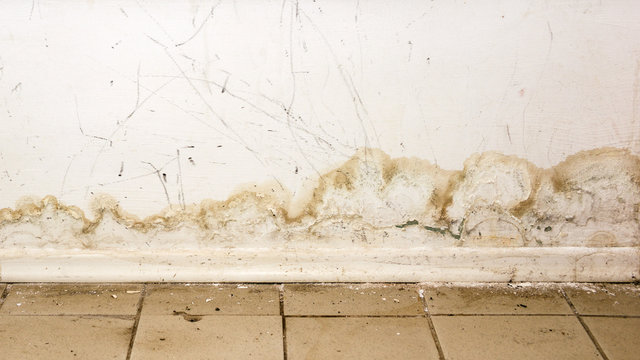 Big wet spots and black mold on the wall of the domestic house room after heavy rain and lot of water