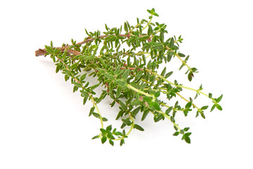 Rosemary herb, close-up isolated on white background