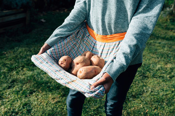 Woman carrying freshly harvested potatoes in her apron