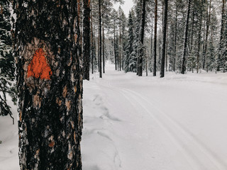 Finland, Lapland, Cross-County Ski Run in Forest