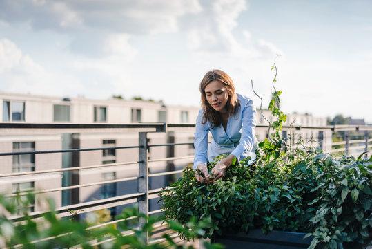 Businesswoman cultivating vegetables in his urban rooftop garden