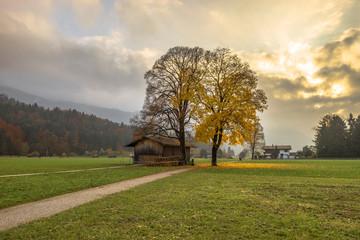 Deutschland, Bayern, Garmisch-Partenkirchen, Wiese im Herbst