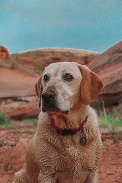 dog sitting by red rocks