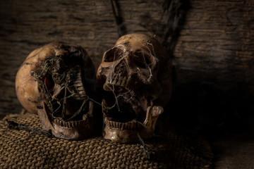 Old horror skull in dark tone room with still life photography