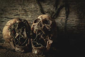 Old horror skulls in dark room with still life photography