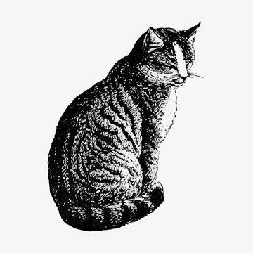 Pet cat vintage drawing