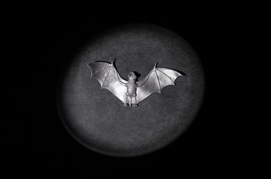 Halloween bat on light spot