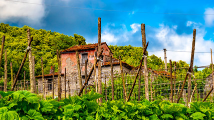 MARATEA, BASILIKATA, ITALY - The ruin of an old farm, in the village of Massa near Maratea, on a sunny day in spring.