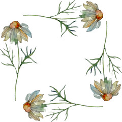 Daisy floral botanical flower. Watercolor background illustration set. Frame border ornament square.