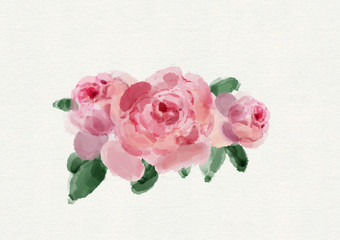 Watercolor Pink Rose Illustration