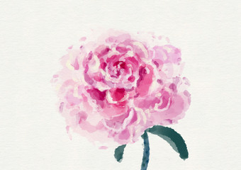 Watercolor Pink Peony Illustration