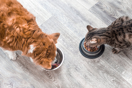 dog and a cat are eating together from a bowl of food. Animal feeding concept