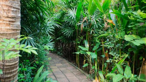 Rainforest park in Southeast Asia, Thailand  Sun glare  Lush