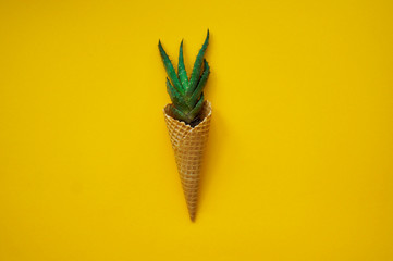 Cactus ice cream top view yellow background. Succulent in a waffle horn.