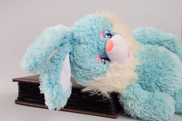 Blue bunny and album for photos. Soft toy blue. Photo album. Easter. Cleaning of the apartment. Childhood