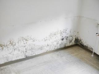 Schimmel und Feuchtigkeit an der Wand