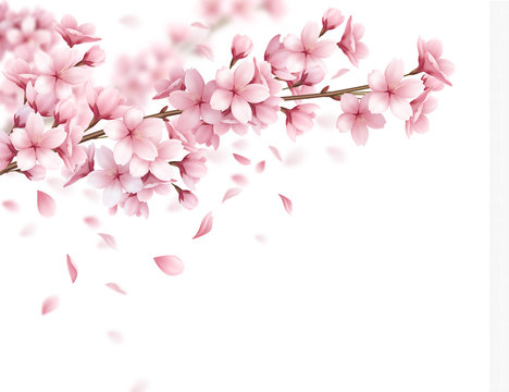 Sakura Realistic Background