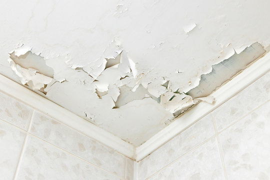 Swelling leaking of whitewash and plaster on ceiling of dwelling due to penetration of water from theroof