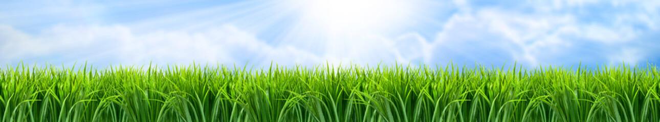 Obraz Zielona trawa panorama krajobrazu - fototapety do salonu