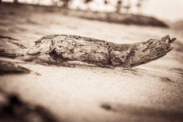 Sepia-Aufnahme eines Stück Treibholz am Strand