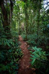 Old trees Makayuk Koh Kood