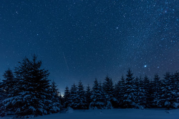 Wall Murals Night blue dark sky full of shiny stars in carpathian mountains in winter forest at night