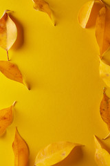 yellow autumn leaf isolated on yellow background, top view copyspace