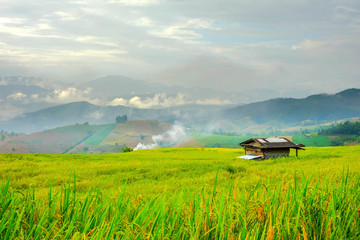 cottage in rice field afternoon time