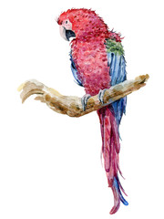 watercolor tropical parrot