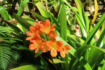 Flower Fototapete