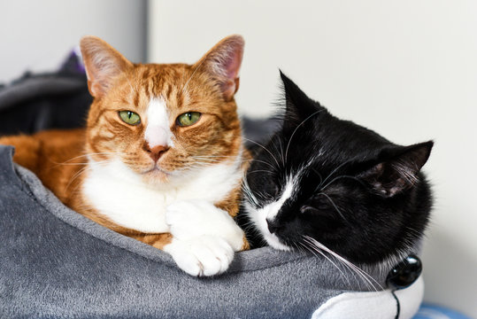 Two cuddling cats at home.