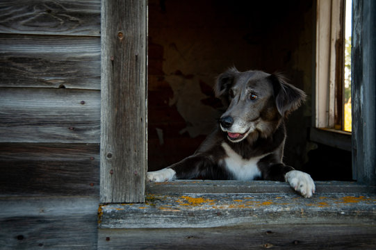 Dog stands with paws on window sill