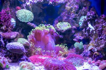 beautiful aquarium fish for the screen saver