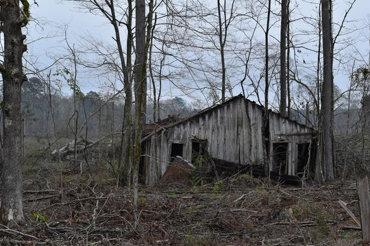 abandoned shack in the woods
