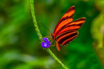 Closeup   beautiful butterfly sitting on flower.  phaetusa