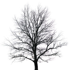 Silhouette of tree with bare branches. Winter