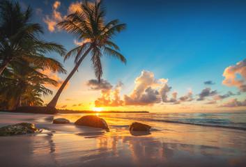 Obraz Palm and tropical beach in Punta Cana, Dominican Republic - fototapety do salonu