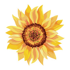beautiful sunflower drawing