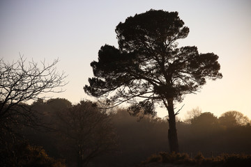 Woodbury Common, Devon