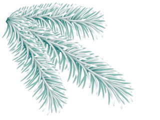 Lightgreen fir tree branch