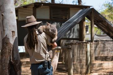 Wombat wird ins Tiergehege getragen