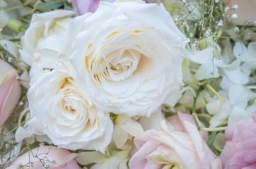 Many light roses